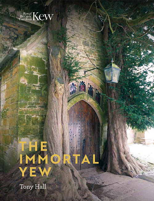 book cover of The Immortal Yew, non-fiction book PR & publicity, READ Media